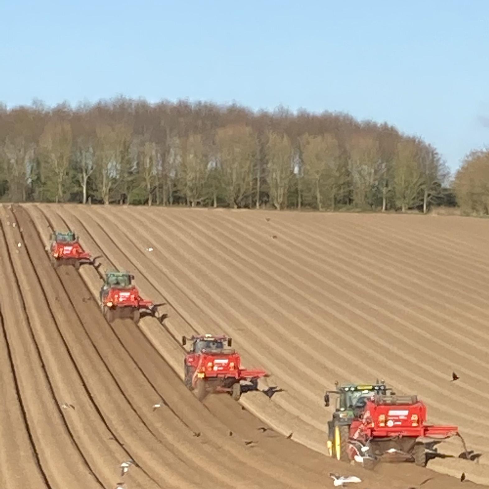 Tractors harvesting potatoes