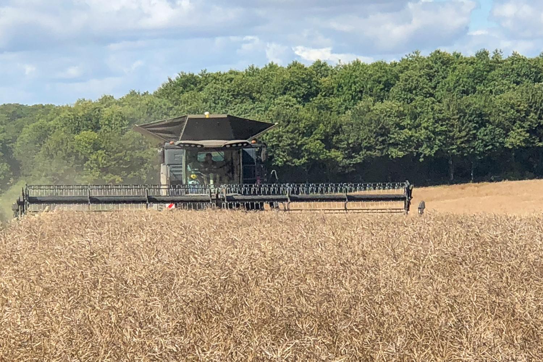 Rapeseed Harvest